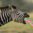Zebras and Princesses provide an a theme idea for real estate